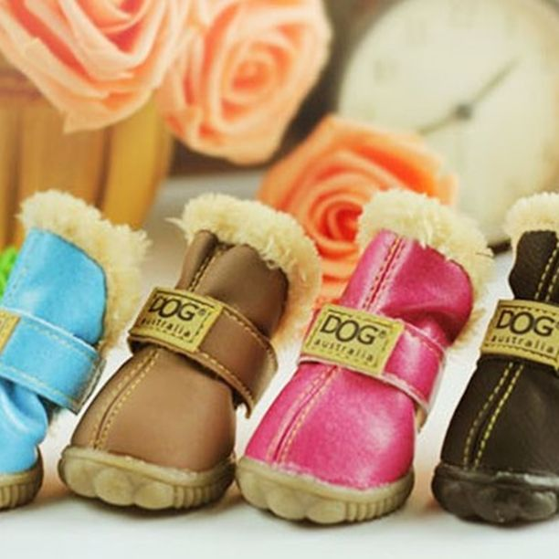 No.... This is too cute!!!!! I think daisy needs these!