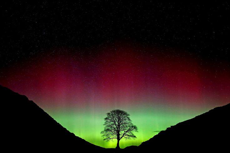 COLORIDA AURORA. La aurora boreal, o Aurora Borealis, brilla sobre el Sycamore Gap en el muro de Adriano en Northumberland, noreste de Inglaterra.