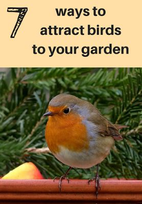 A Green and Rosie Life: Weekly Green Tips #26 - 7 ways to attract birds to your garden