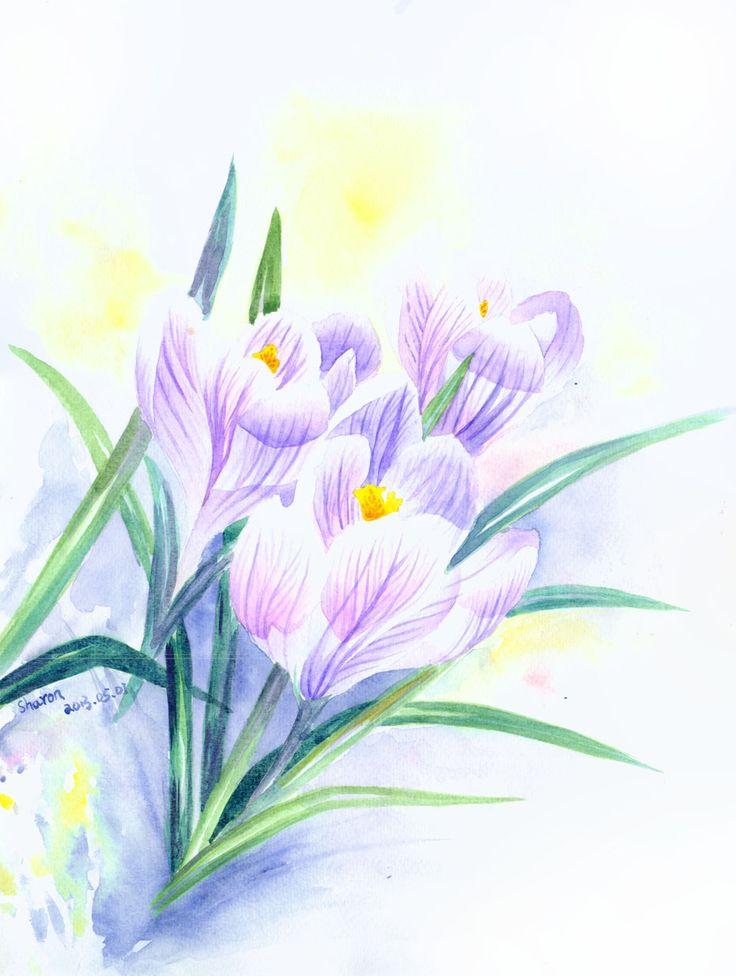 crocus Crocus, Watercolor, Flowers