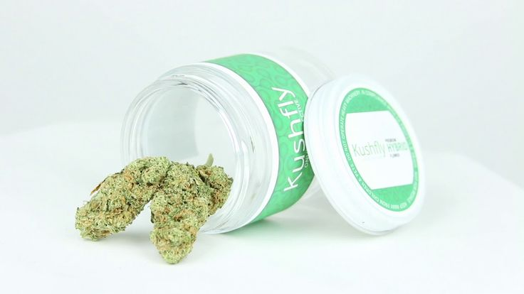 Kushfly Medical Marijuana Delivery - Blueberry Girl Scoot Cookies Cannabis Strain Review