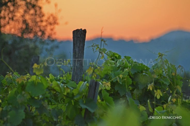 La Maremma Toscana, dal mare alla montagna in tavola con i prodotti tipici