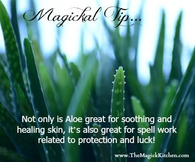 Use Aloe Vera in spell work related to protection and luck!