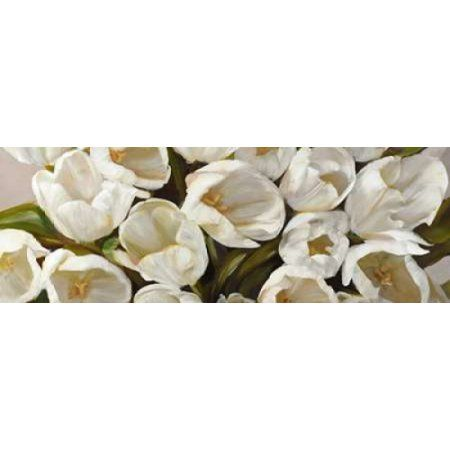 Posterazzi Tulipani bianchi Canvas Art - Leonardo Sanna (10 x 20)