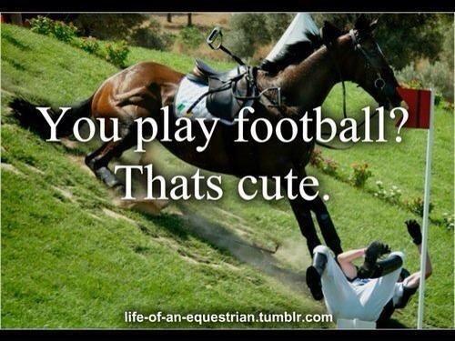 funny horse pictures - Google zoeken