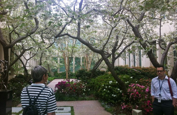 A group of white crab apples (Malus spp.) blooms in the courtyard.