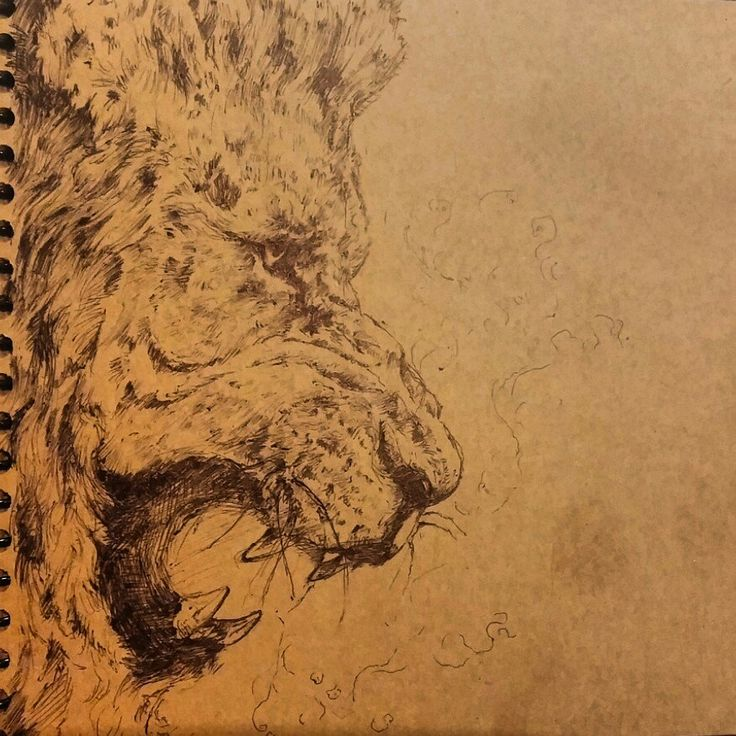 #draw #drawing #art #illustration #picture #Lion
