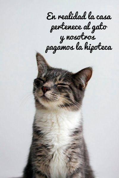 Citas sobre Gatos - Página 6 - Mi Perro Es Único