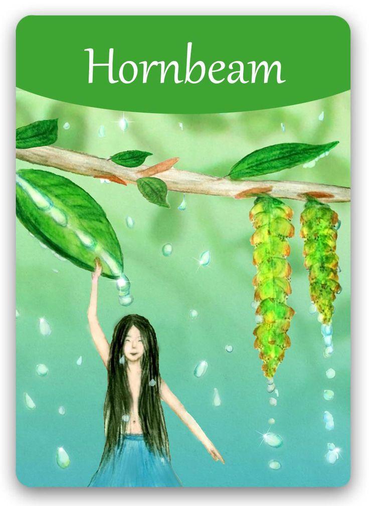 Bach Flower: Hornbeam