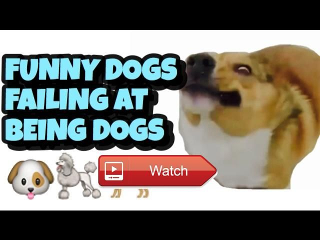 🐶 FUNNY DOGS WHO FAIL AT BEING DOGS for Kids 🐩 on Pet Lovers 🐼