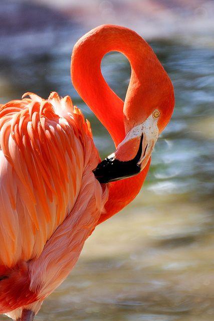 Flamingo....for @lunamosity ...thinkin of u.
