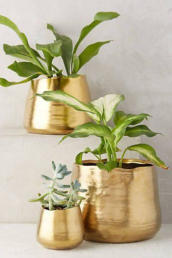 Gilded Planter                                                                                                                                                                                 More