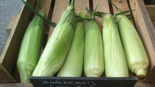 Soep van verse suikermaïs | Biologische Tuinderij de Elzenkamp