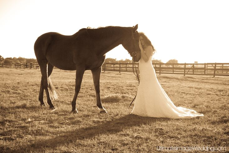 cowgirl wedding photography meet more horse loversequestrian singles cowgirls or cowboys at the site wwwhorsesinglesnet pinterest google search and