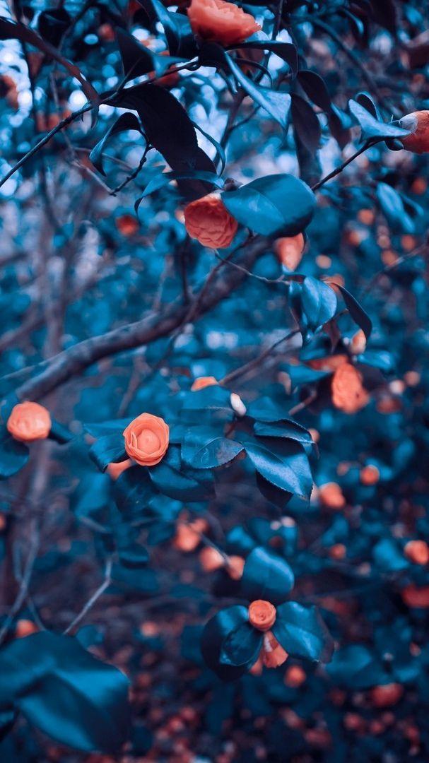 Cb Background Hd Blurred Background Photography Best Background Images Blur Photo Background
