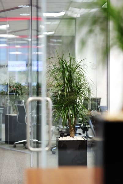 32 best A Green Business images on Pinterest Green business