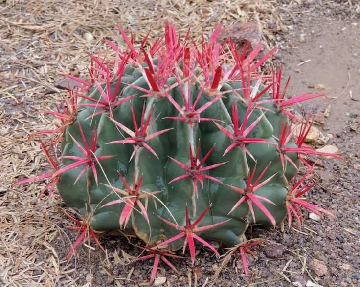 M s de 1000 im genes sobre suculents and cactas en for Vivero feroxcactus