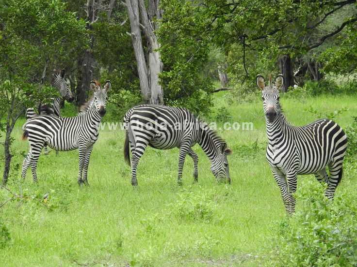 Choose your #SafariDestination for all of the top #TanzanianHoliday. Here is our best offer available. http://hola-africa.com/safari-destination.html