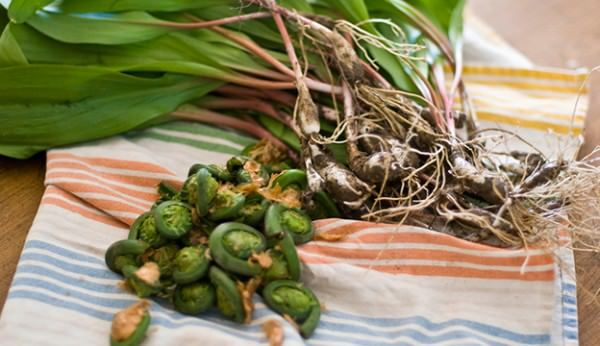 7 Essbare Frühlingskräuter – Hobbyfarmen   – food- foraging