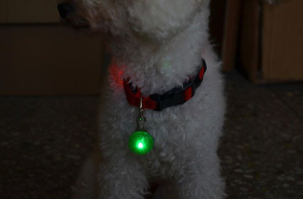LED Clip-On Dog Collar Safety Light. I have a similar light for my dog and use it at night even though we have a fenced yard in case she gets out by some chance. Plus I can always see where she is! Love it and so does she!