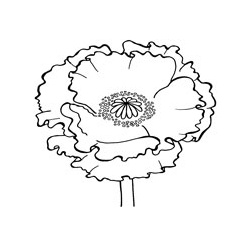 Woodware clear stamp: Poppy | Woodware single stamps | Woodware | Stamps (clear and foam) | The Craft Barn | Craft Supplies UK | Art and Craft Supplies UK | England
