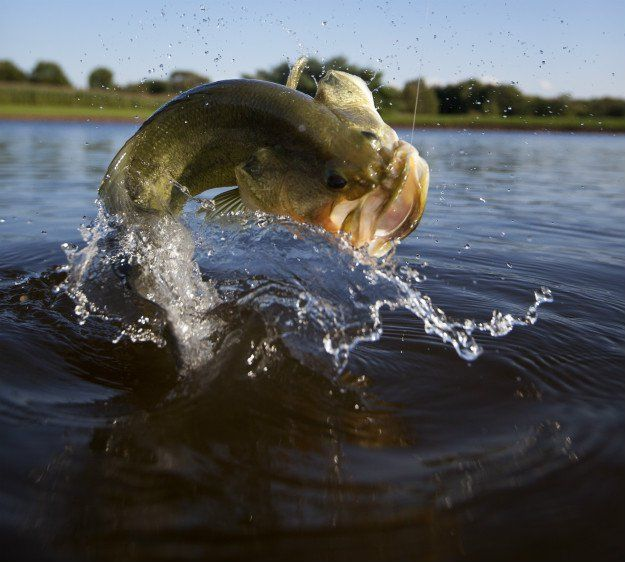 25 best ideas about bass fishing on pinterest bass for Bass fishing for beginners