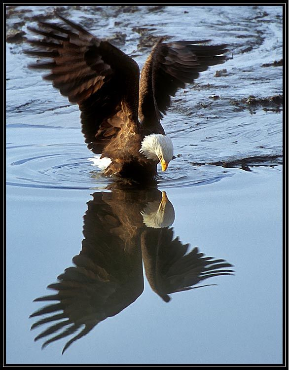 Save the Eagles - 28 Stunning Eagle Photos for Inspiration | UPrinting