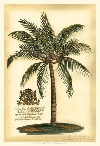 British Colonial Palm III Print at AllPosters.com