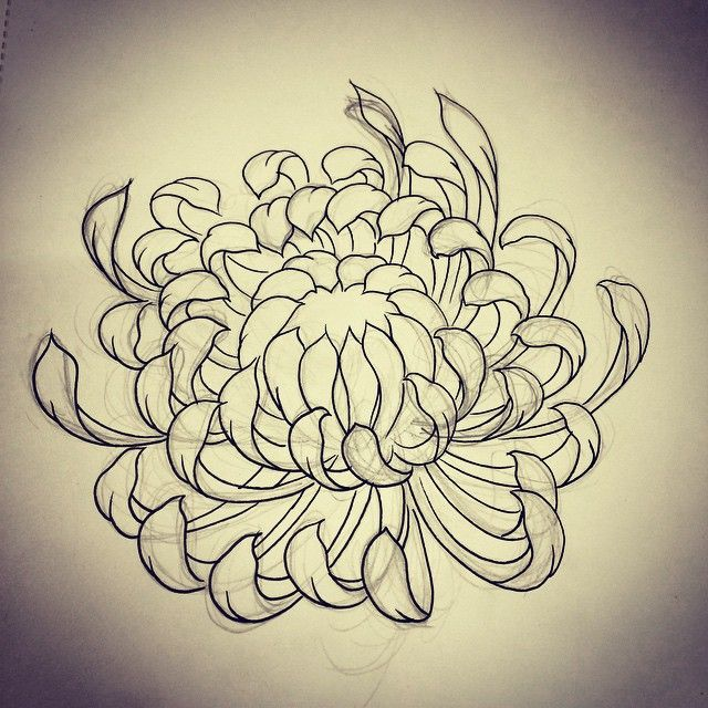 Chrysanthemum sketch by Rebekka Rekkless via @rebekkarekkless on Instagram. Tattoo apprentice at Adorned Tattoo, Dorset UK.