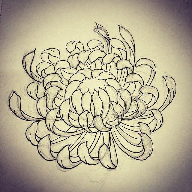 Chrysanthemum sketch by Rebekka Rekkless via @rebekkarekkless on Instagram. Tattoo apprentice at Adorned Tattoo, Dorset UK.