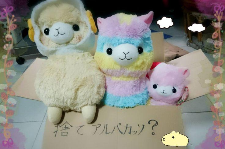 Amigurumi Alpacasso : Best cute non cats images on pinterest stuffed