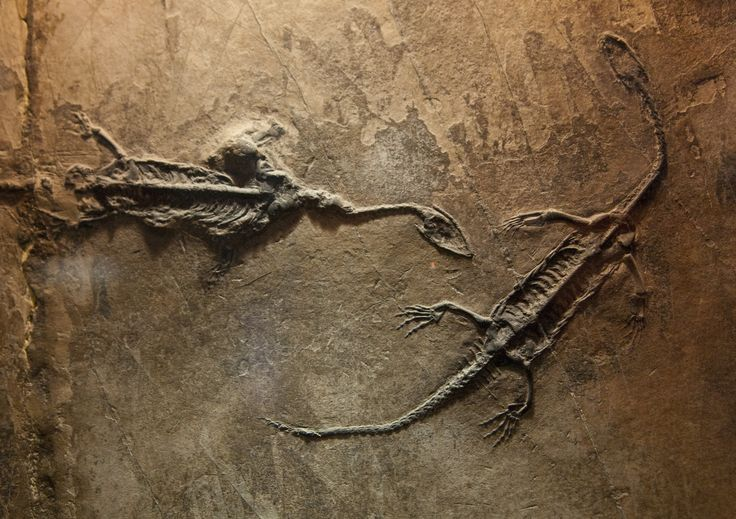 Dinosaur Fossils | Home ›› Dinosaur Pictures ›› Fossil Dinosaurs