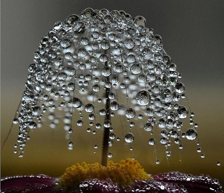 dewdrops tree on a flower pistil
