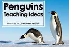 Are you teaching about penguins in your classroom or homeschool? This resource has ideas, crafts, activities, and lessons for your penguins thematic unit. The book lists, bulletin board photos, pictures of kid projects and printables are great for kindergarten, first grade, second grade, third grade, fourth grade and fifth grade. Planning a penguins theme will be easy.