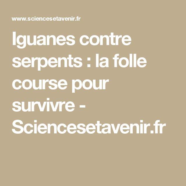 Iguanes contre serpents : la folle course pour survivre  - Sciencesetavenir.fr
