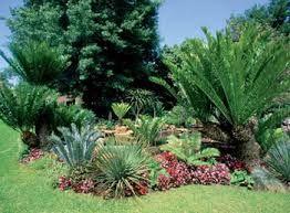 """Résultat de recherche d'images pour """"jardins avec palmiers"""""""