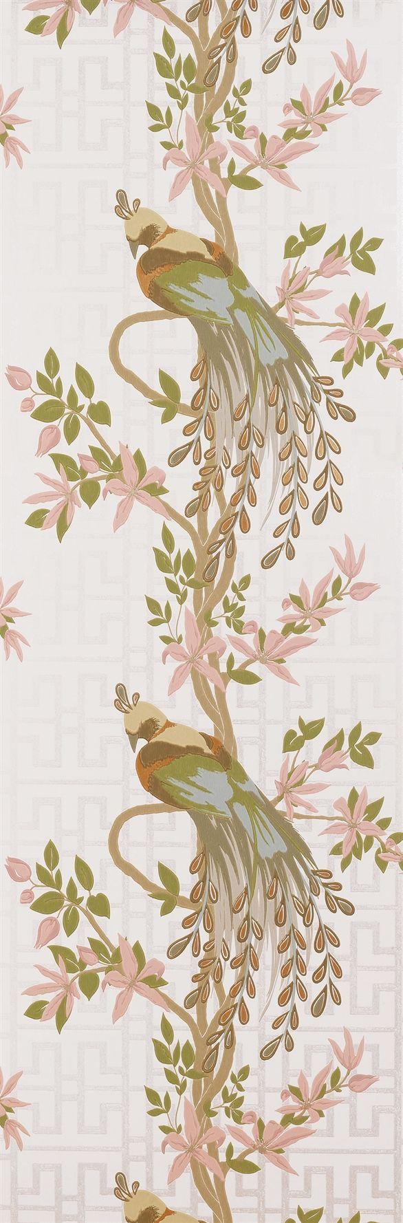 17 best images about bird wallpaper on pinterest rose - Nina campbell paradiso wallpaper ...