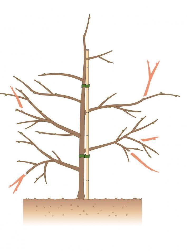 die besten 25 bonsai pflege ideen auf pinterest pflanzen umtopfen pflanzen vermehrung und. Black Bedroom Furniture Sets. Home Design Ideas