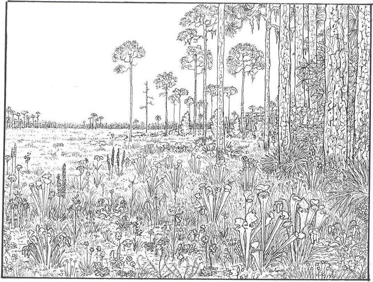 7e20469da7a03a9e9a1b1bf1529d457b also 321 best images about landscapes houses buildings coloring on hard landscape coloring pages together with 454 best images about coloriage on pinterest dovers christmas on hard landscape coloring pages together with coloring pages for adults scenery google search coloring on hard landscape coloring pages together with naked coloring pages for adults adult coloring pages printable on hard landscape coloring pages