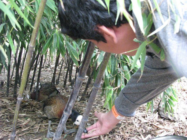 8/5/14 Feeling lucky to be feeding LUCKY the duck!