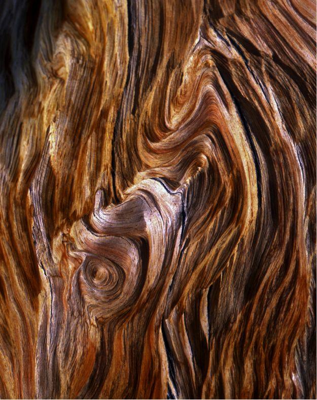⭐brown wood . 201606