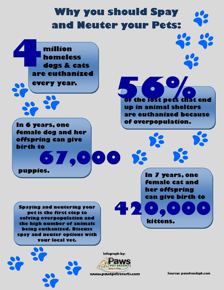 The Importance of Spaying or Neutering Your Pet