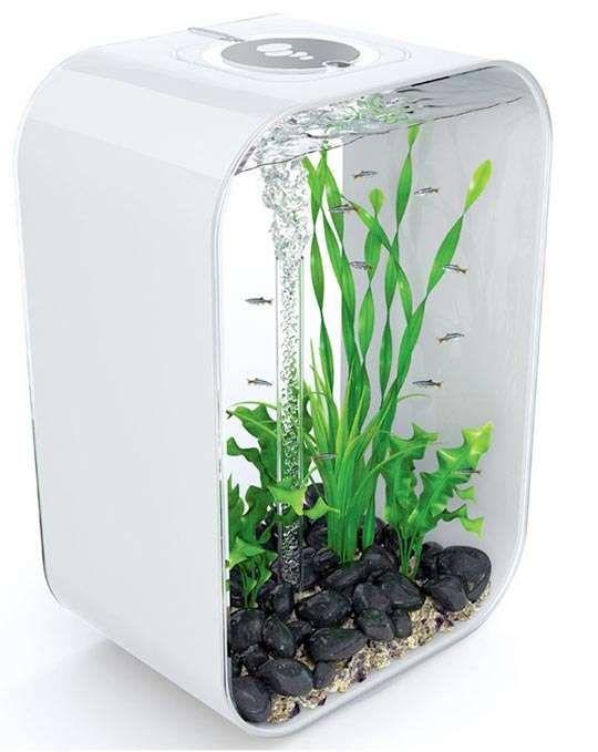 87 Unconventional Aquariums