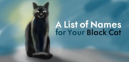 Cool, Unique and Creative Black Cat Names For Your Beloved Pet