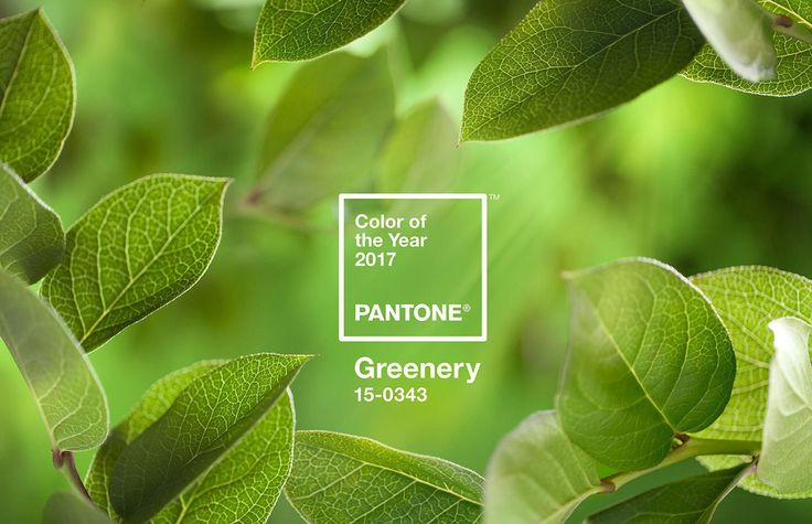 Pantone Color of the Year - Greenery By 360 Web Designs