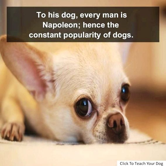 Dog Training Guide For Example A Loving And Calm Dog Will
