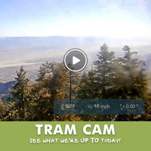 Enjoy The Current View From Our Tram Cam Today Pstramway Palmspringsaerialtramway In 2020 Aerial Tramway Palm Springs Aerial