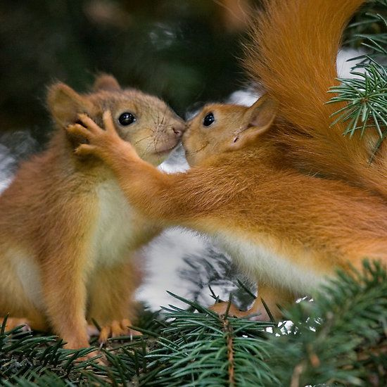 Baby Squirrel Kiss