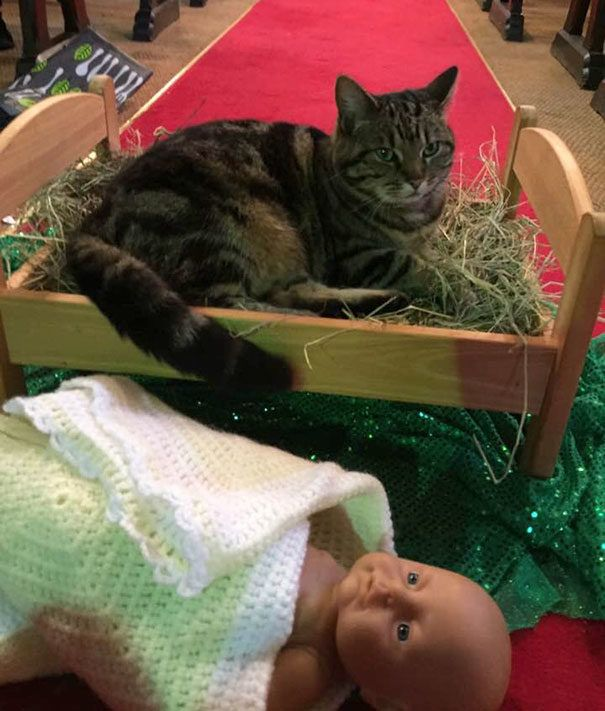 17 Times Cats Posed With Jesus By Joining Nativity Scenes