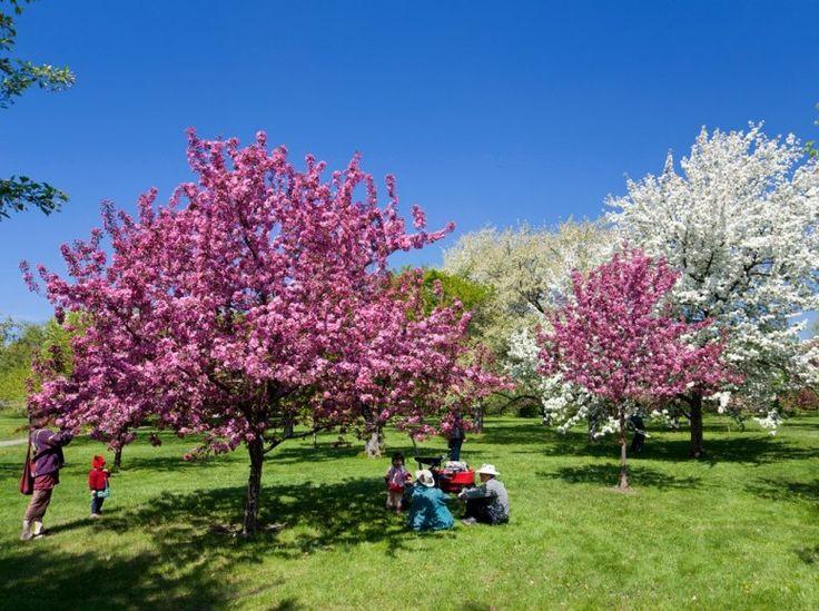 The World's Most Beautiful  Botanical Gardens ::: MONTREAL BOTANICAL GARDEN  Montreal, Quebec, Canada